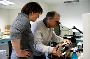 Analyses paléobotaniques avec l'appui de l'IMBE, examen de restes de bois minéralisé par Frédéric Guibal, Chargé de recherches CNRS, Institut Méditerranéen de Biodiversité et d'Ecologie marine et continentale. UMR 7263 CNRS